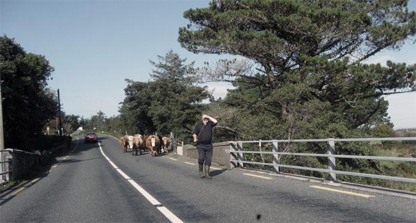 Verkehrschaos in Irland